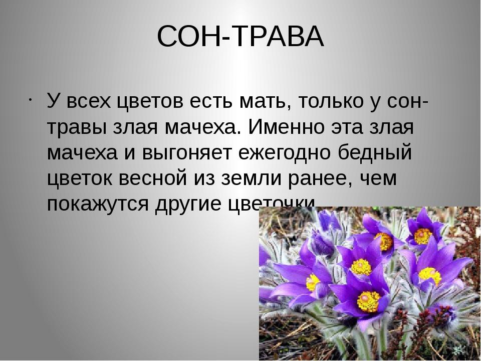 СОН-ТРАВА У всех цветов есть мать, только у сон- травы злая мачеха. Именно эт...