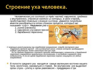 Человеческое ухо состоит из трёх частей: наружного, среднего и внутреннег