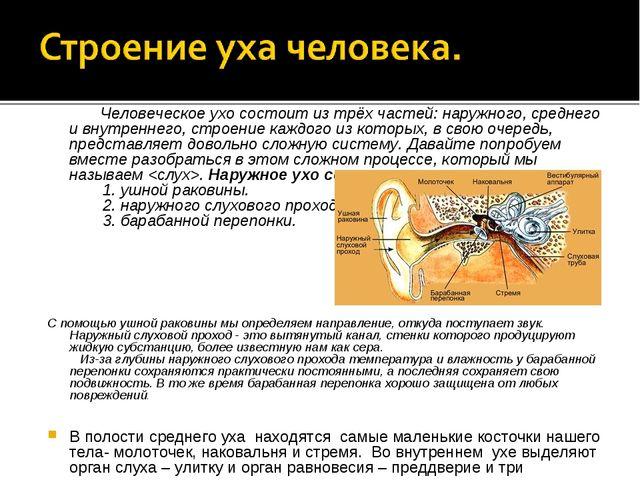 Человеческое ухо состоит из трёх частей: наружного, среднего и внутреннег...