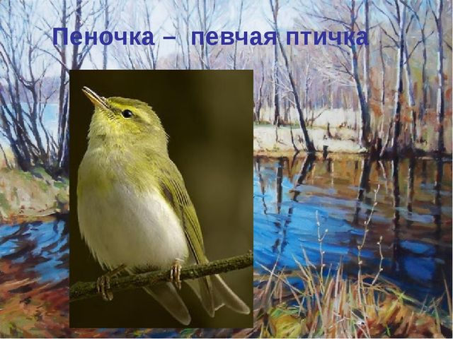 Пеночка – певчая птичка