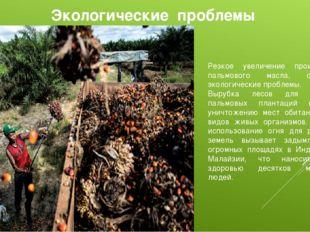 Экологические проблемы Резкое увеличение производства пальмового масла, обост
