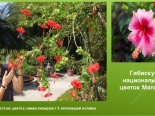 Гибискус-национальный цветок Малайзии 5 лепестков цветка символизируют 5 запо