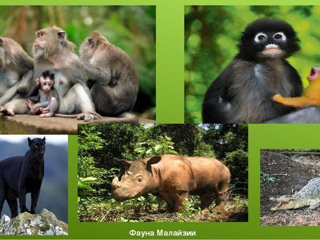 Фауна Малайзии