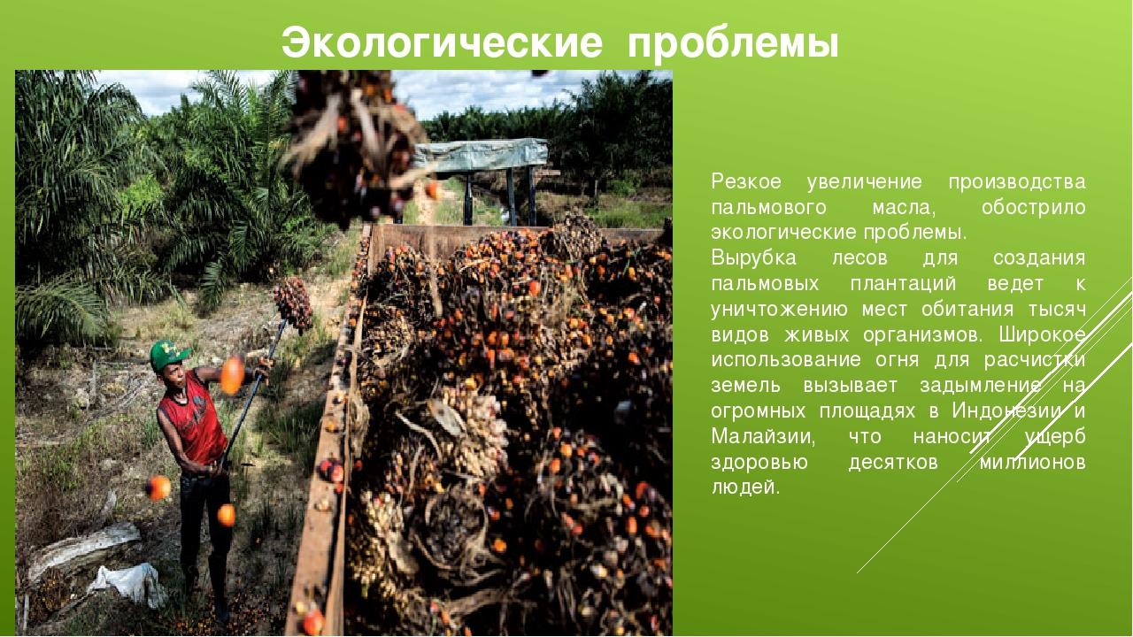 Экологические проблемы Резкое увеличение производства пальмового масла, обост...