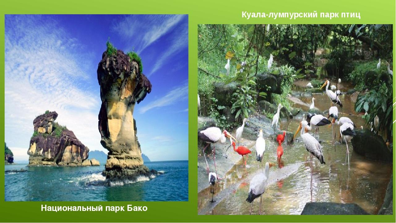 Национальный парк Бако Куала-лумпурский парк птиц