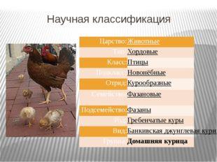 Научная классификация Царство: Животные Тип: Хордовые Класс: Птицы Подкласс: