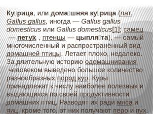 Ку́рица, илидома́шняя ку́рица(лат.Gallus gallus, иногда—Gallus gallus d