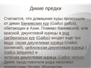 Дикие предки Считается, что домашние куры произошли от дикихбанкивских кур(