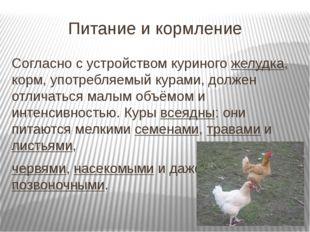 Питание и кормление Согласно с устройством куриногожелудка, корм, употребляе