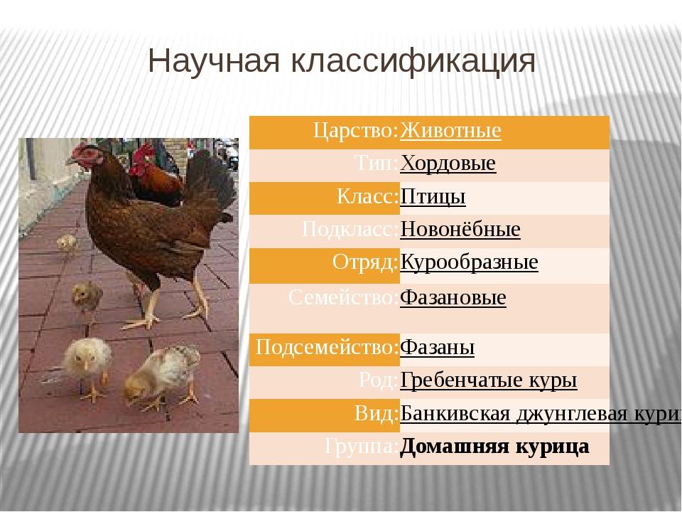Научная классификация Царство: Животные Тип: Хордовые Класс: Птицы Подкласс:...