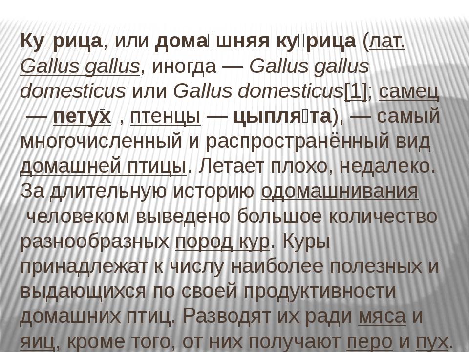 Ку́рица, илидома́шняя ку́рица(лат.Gallus gallus, иногда—Gallus gallus d...