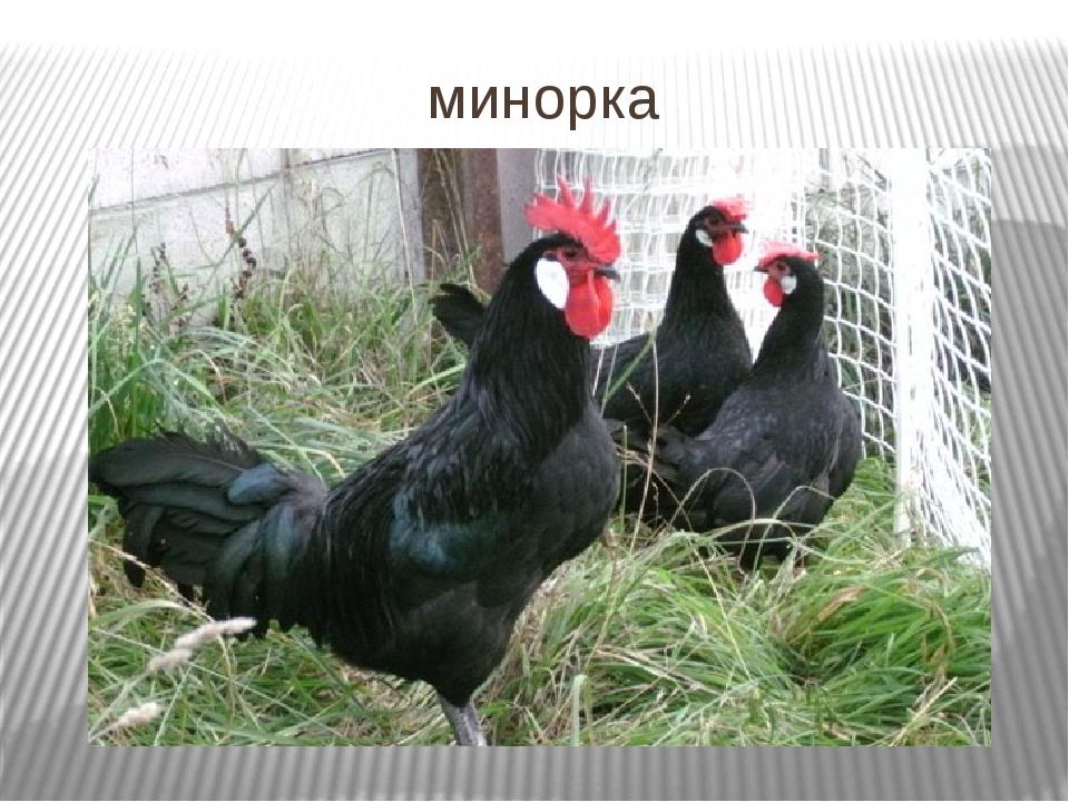 минорка