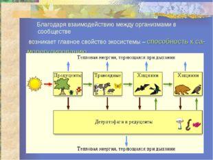 Благодаря взаимодействию между организмами в сообществе возникает главное св