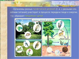 Организмы разных трофических уровней (т. е. с разными спо- собами питания) у