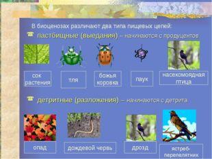 сок растения тля божья коровка паук насекомоядная птица В биоценозах различаю