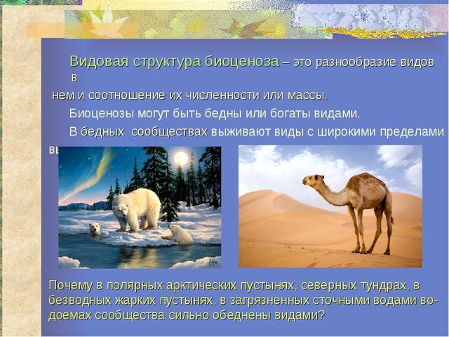 Видовая структура биоценоза – это разнообразие видов в нем и соотношение их...