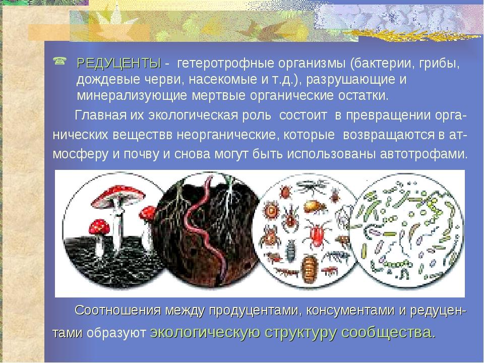РЕДУЦЕНТЫ - гетеротрофные организмы (бактерии, грибы, дождевые черви, насеком...