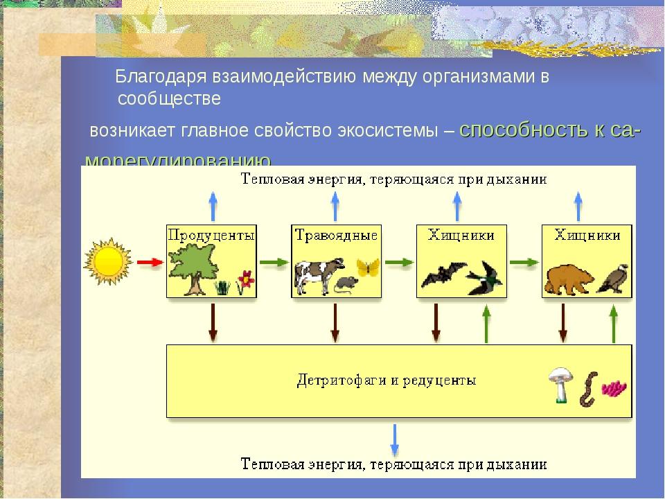 Благодаря взаимодействию между организмами в сообществе возникает главное св...