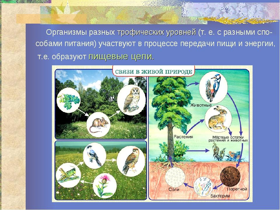 Организмы разных трофических уровней (т. е. с разными спо- собами питания) у...