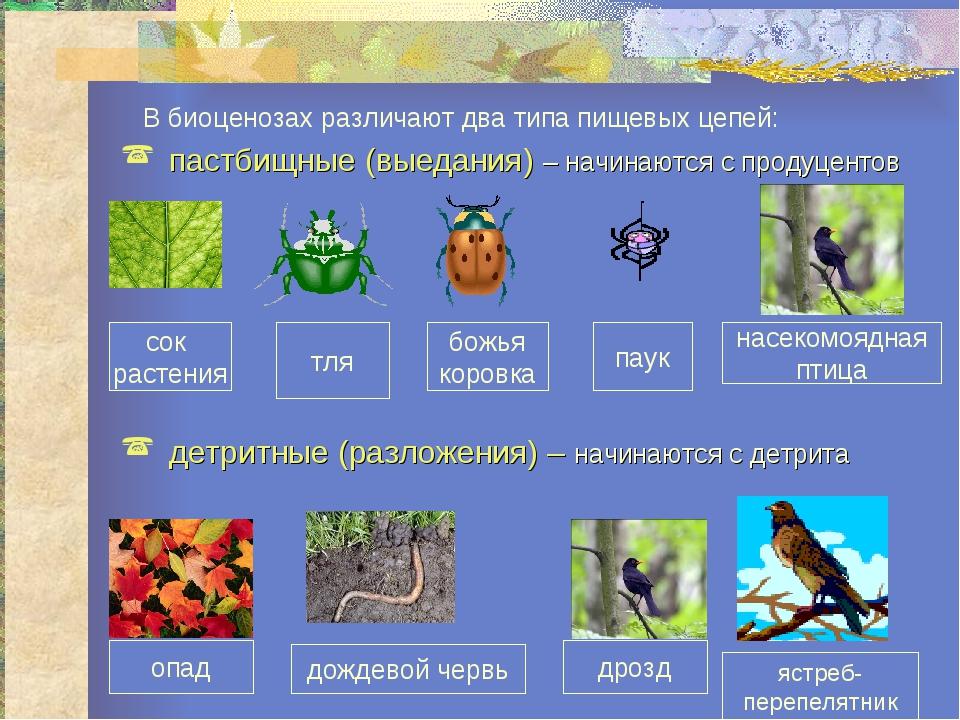 сок растения тля божья коровка паук насекомоядная птица В биоценозах различаю...