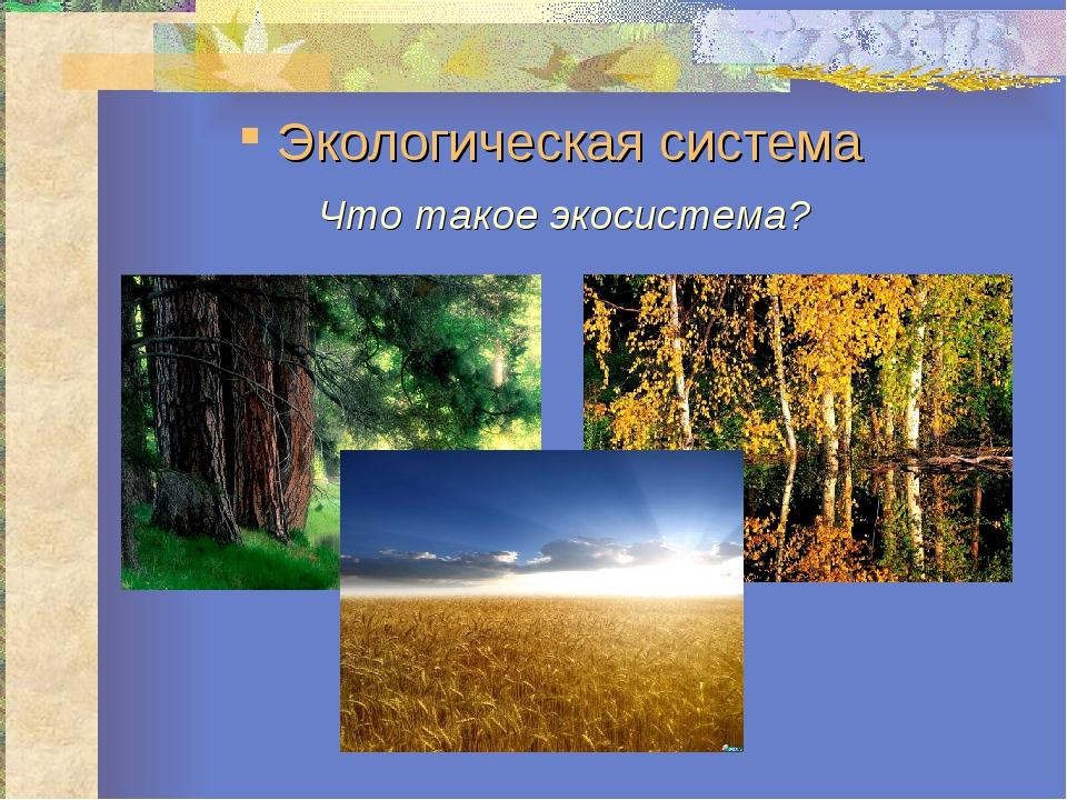 Экологическая система Что такое экосистема?