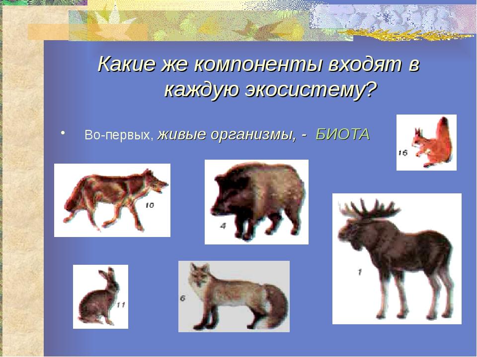 Какие же компоненты входят в каждую экосистему? Во-первых, живые организмы, -...