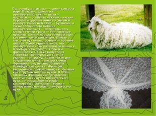 Пух оренбургских коз— самый тонкий в мире. Поэтому изделия из оренбургского