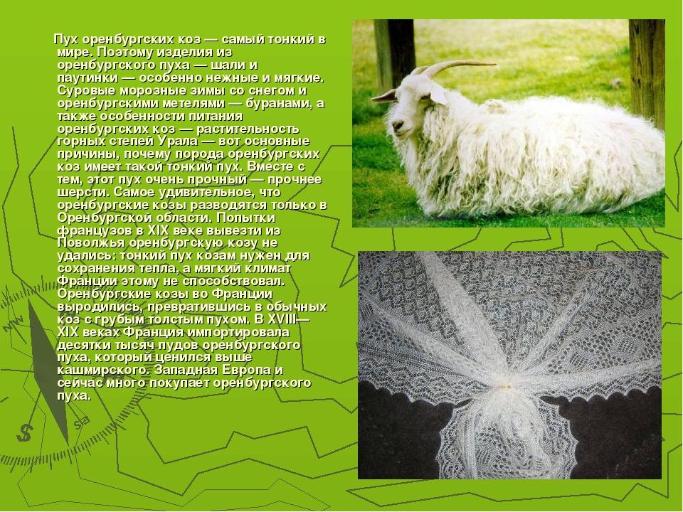 Пух оренбургских коз— самый тонкий в мире. Поэтому изделия из оренбургского...