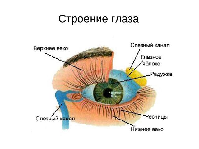 Очки при старческая дальнозоркость