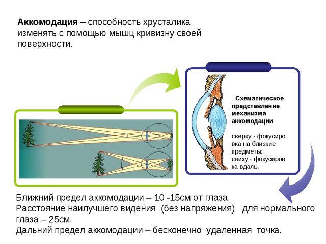 Аккомодация – способность хрусталика изменять с помощью мышц кривизну своей п...