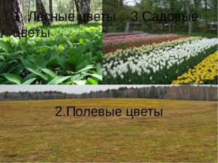 1. Лесные цветы 3.Садовые цветы 2.Полевые цветы