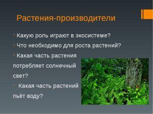 Растения-производители Какую роль играют в экосистеме? Что необходимо для рос