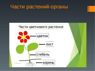 Части растений-органы