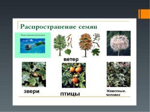 Распространение семян
