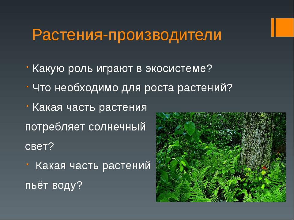Растения-производители Какую роль играют в экосистеме? Что необходимо для рос...