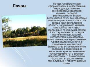Почвы Почвы Алтайского края сформированы в четвертичный период под влиянием р