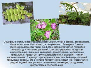 Обширные степные пространства охватывают Алтай с севера, запада и юга. Лишь