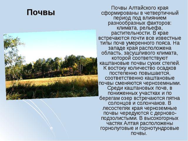 Почвы Почвы Алтайского края сформированы в четвертичный период под влиянием р...