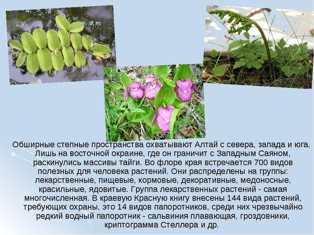 Обширные степные пространства охватывают Алтай с севера, запада и юга. Лишь...