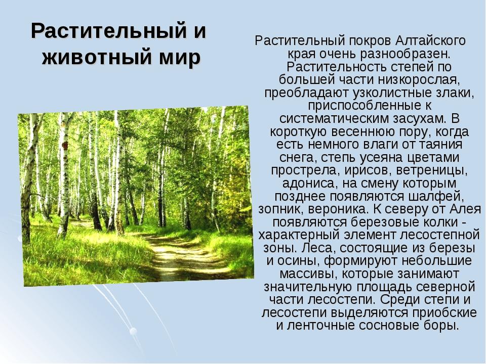 Растительный и животный мир Растительный покров Алтайского края очень разнооб...