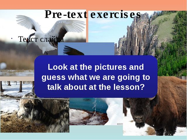 Pre-text exercises Текст слайда Look at the pictures and guess what we are go...