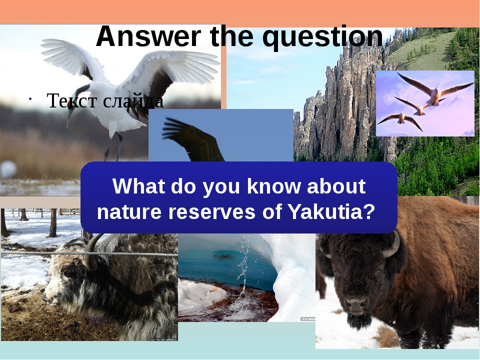 Answer the question Текст слайда What do you know about nature reserves of Ya...