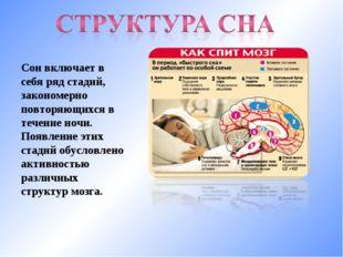 Сон включает в себя ряд стадий, закономерно повторяющихся в течение ночи. Поя