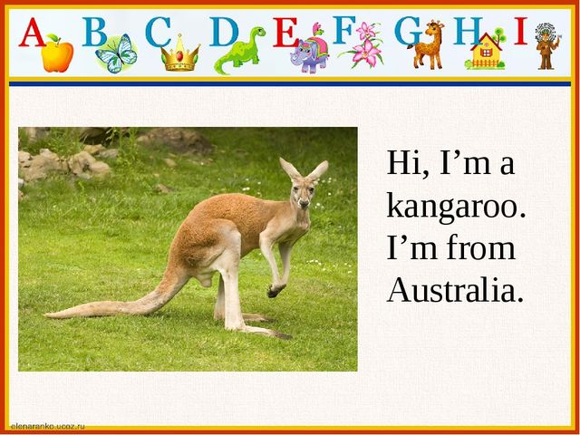 Hi, I'm a kangaroo. I'm from Australia.