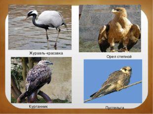 Журавль-красавка Орел степной Курганник Пустельга