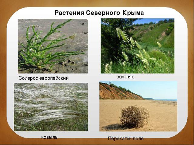 Растения Северного Крыма Солерос европейский житняк ковыль Перекати- поле