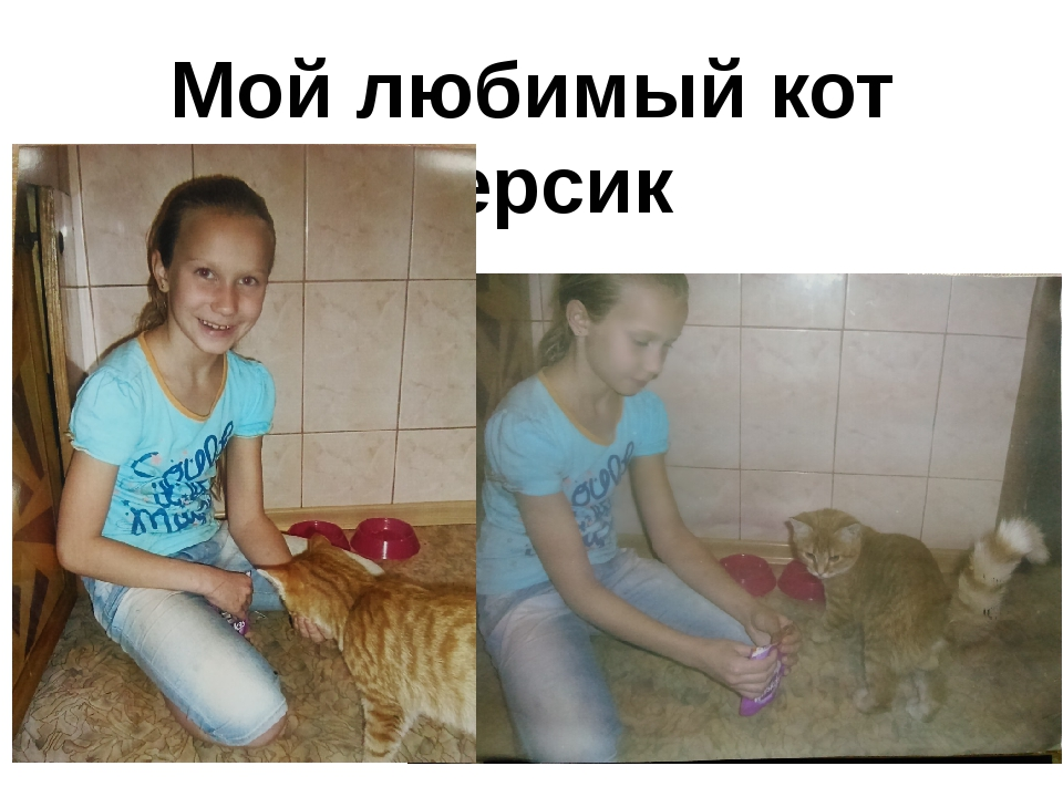 Мой любимый кот Персик