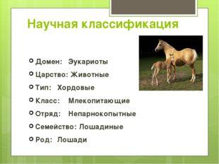 Научная классификация Домен: Эукариоты Царство: Животные Тип: Хордовые Клас