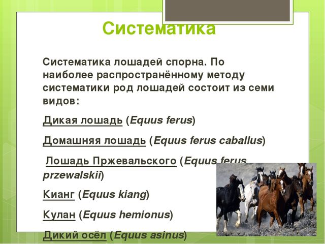 Систематика Систематика лошадей спорна. По наиболее распространённому методу...