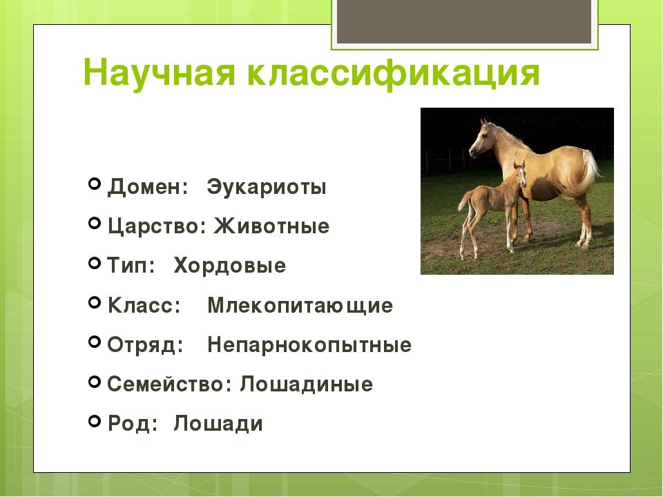 Научная классификация Домен: Эукариоты Царство: Животные Тип: Хордовые Клас...